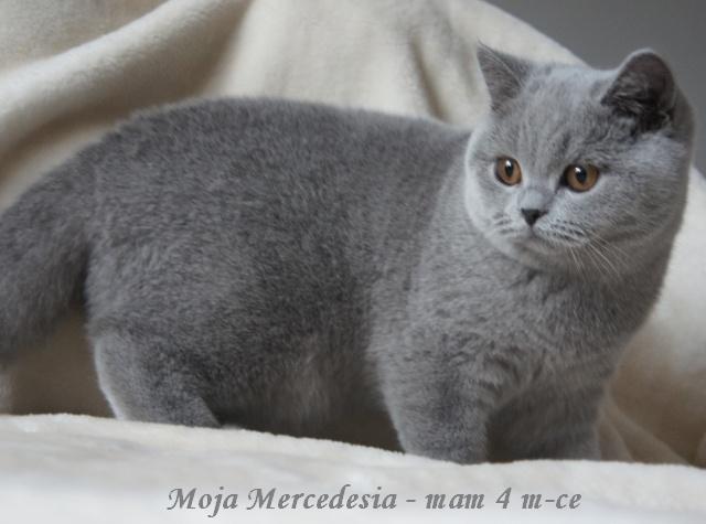MOJA MERCEDESIA640