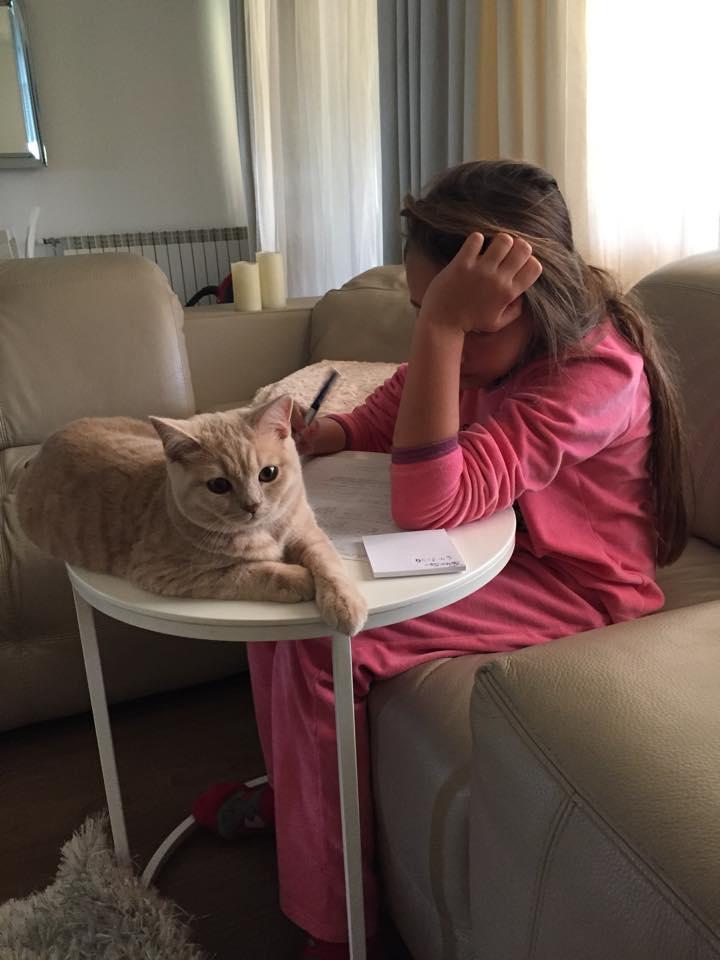 kot brytyjski kremowy- Kremuś w Nowym domku  09 2014