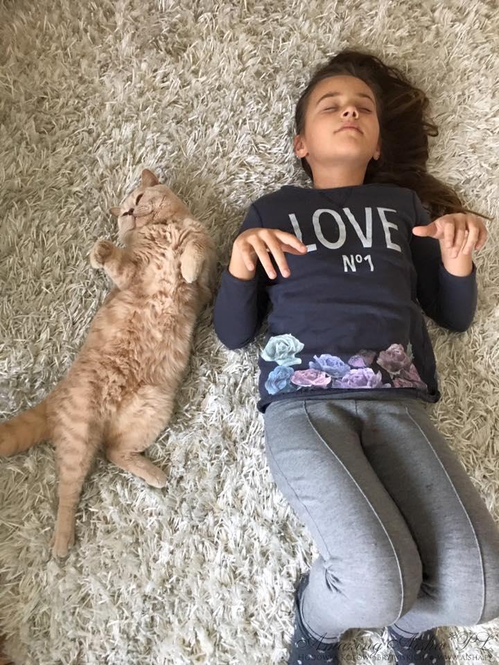 kot brytyjski kremowy- Westmister  - w nowym domu 11 2015